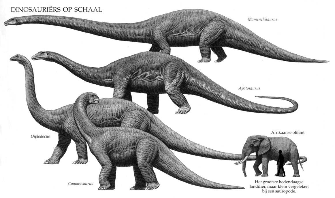 Sauropoden op schaal
